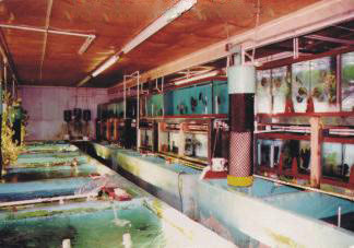 A small Section of Gwynnbrook Farm Discus Fish Hatchery