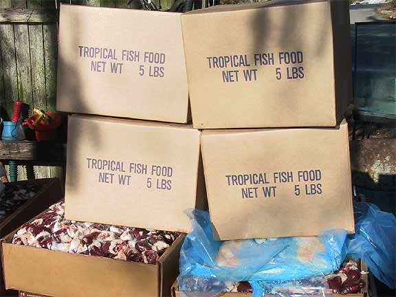 Tropical Fish Flake Food for discus fish food recipe