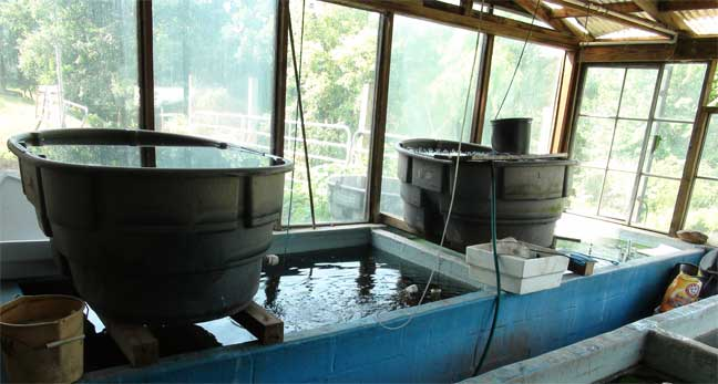 Tropical Fish Farms