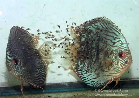 Контакты.  Болезни рыб. происхождение рыб.  Виды рыбок.  Главная.